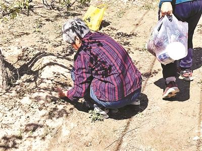 近日多个公园野菜被挖 专家:公园采用回收利用的水浇灌需谨慎食用