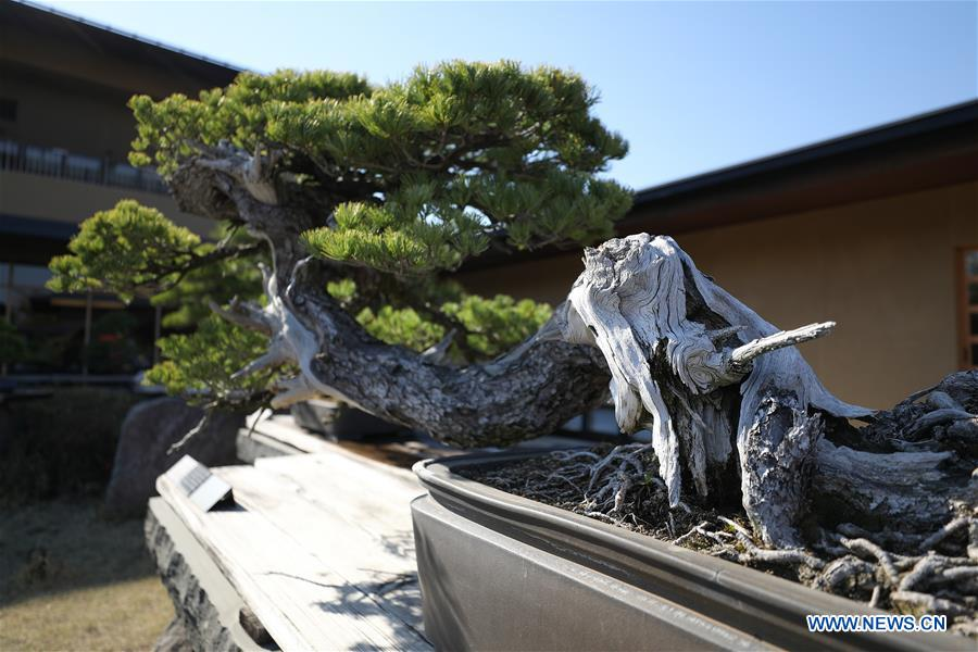 People visit Omiya Bonsai Art Museum in Saitama, Japan