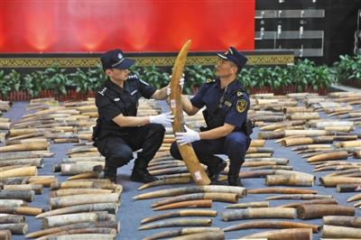 今年查获8吨走私象牙及制品 走私一根象牙判5年以上
