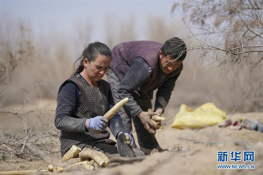 """(新华全媒头条・图文互动)(6)一步千年,""""最后的沙漠部落""""迁入新家园"""