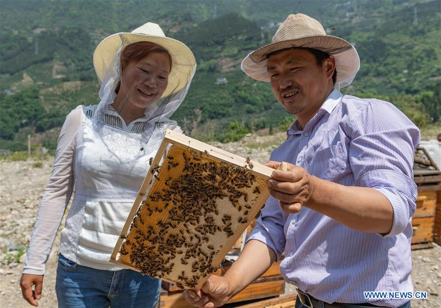 #CHINA-HUBEI-YICHANG-ECONOMY-BEE-HONEY (CN)