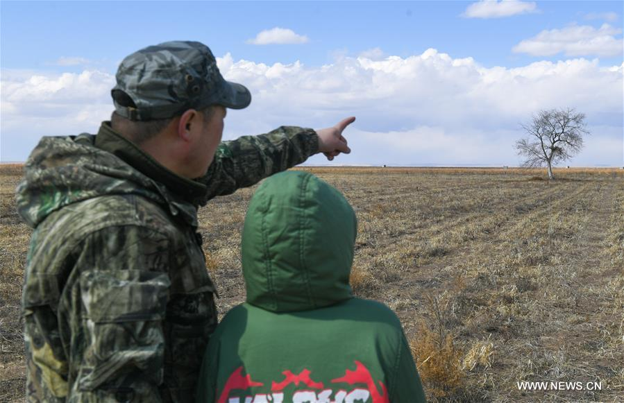 Shuanglong, a man of Mongolian ethnic group, and his son look at a newly-built nest of upland buzzard on their way to the Hulun Lake in New Barag Right Banner of the Hulun Buir City, north China\'s Inner Mongolia Autonomous Region, April 13, 2019. Shuanglong, a volunteer born in the 1980s, has been dedicated to protecting wildlife inhabiting along the Hulun Lake over the past ten years. Over 40 endangered animals have been saved through his efforts. Shuanglong has organized various activities including photo exhibitions and lectures, as a way to raise awareness of wildlife protection among the public. Affected by Shuanglong, some volunteers also joined him to protect wildlife along the Hulun Lake. (Xinhua/Peng Yuan)