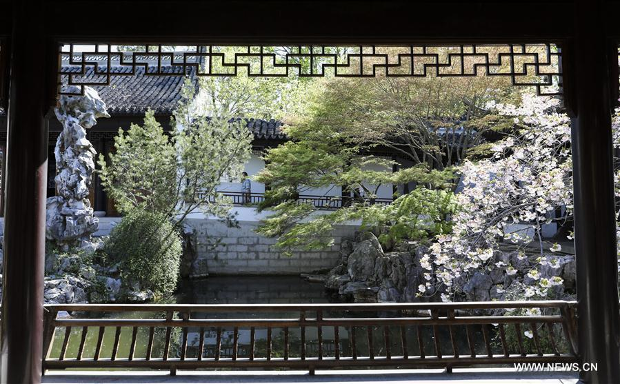 Spring scenery of Chinese Scholar's Garden in New York