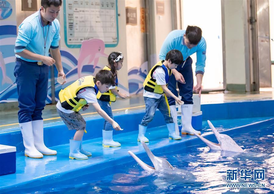 (环境)(1)第二届中华白海豚保护宣传日在珠海长隆启动