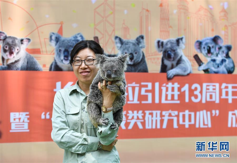 (社会)(1)考拉在广州形成最大海外种群