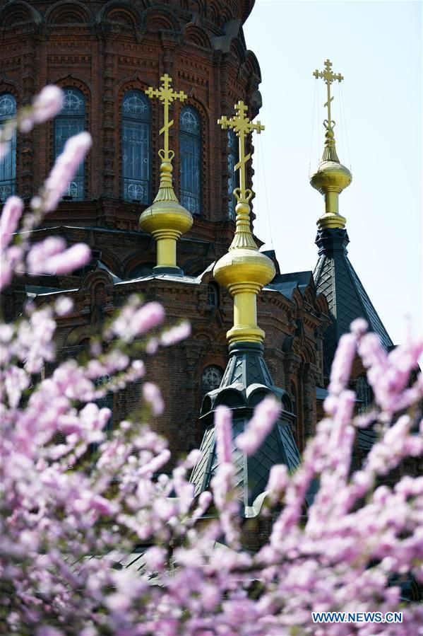 Flowers seen against backdrop of St. Sophia Cathedral in Harbin, China's Heilongjiang