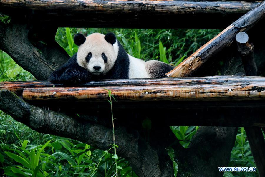 CHINA-TAIPEI-GIANT PANDAS-TOURISM (CN)