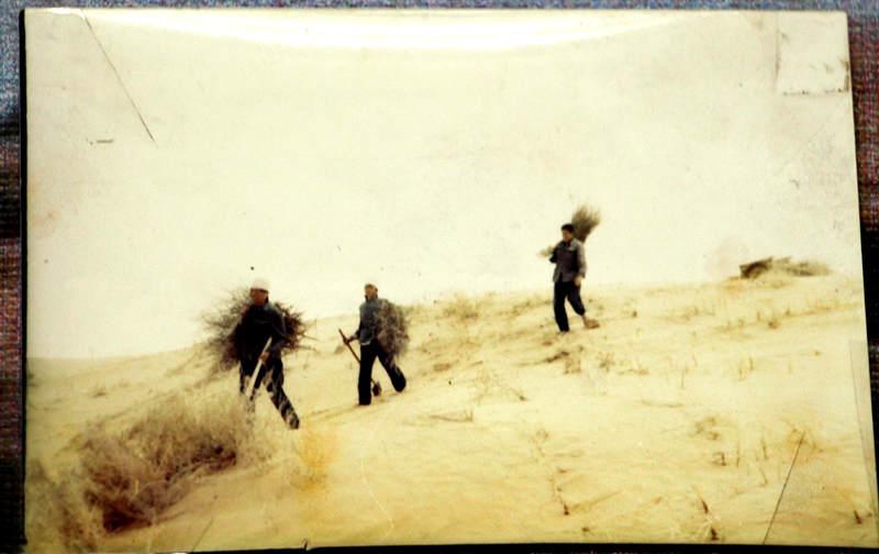 上世纪50年代,榆林群众治沙场景(记者 王甲铸 翻拍)