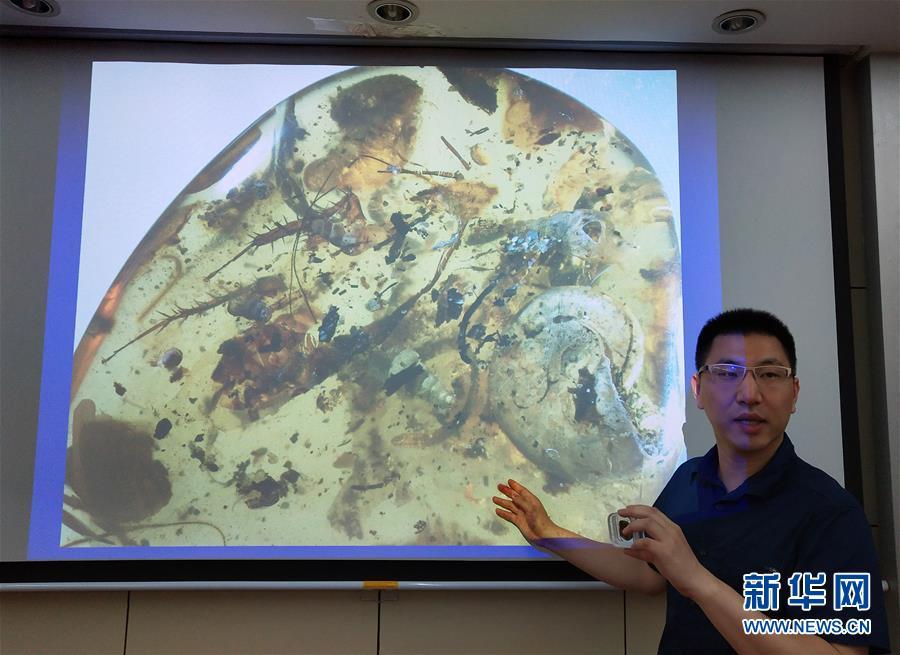 (图文互动)(2)中国科学家在琥珀中发现史前海洋动物