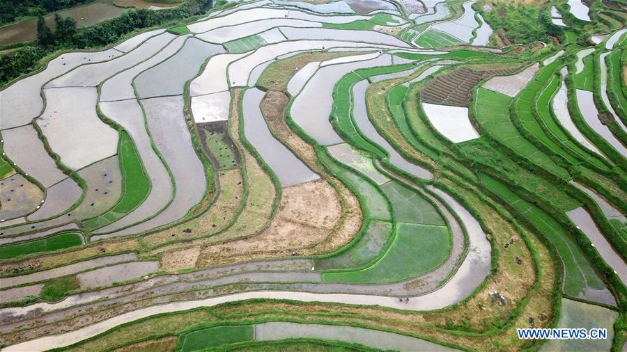 View of terraced fields in southwest China's Guizhou