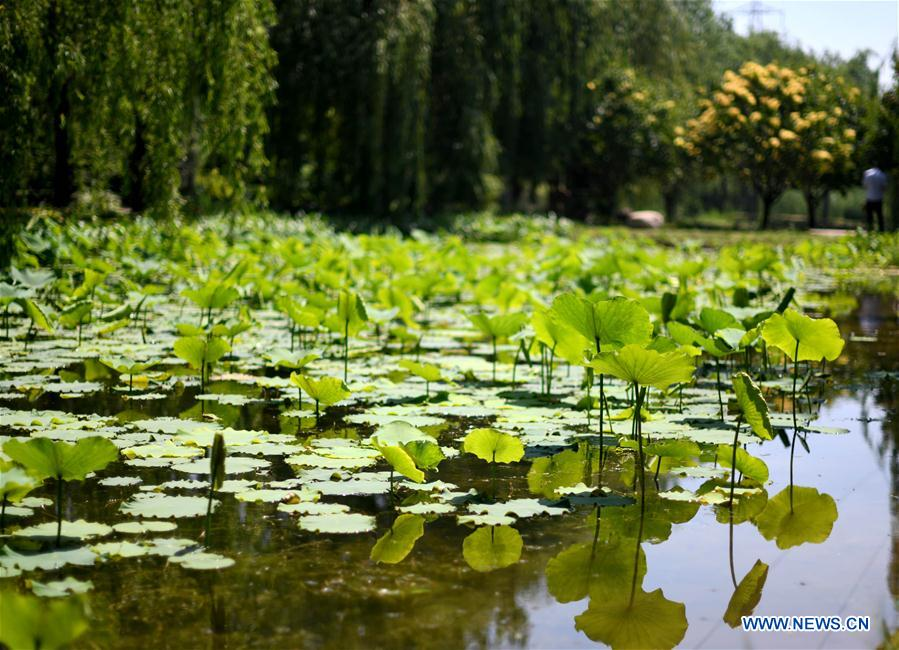 Greening efforts transform saline-alkaline marsh into botanical garden in Tianjin