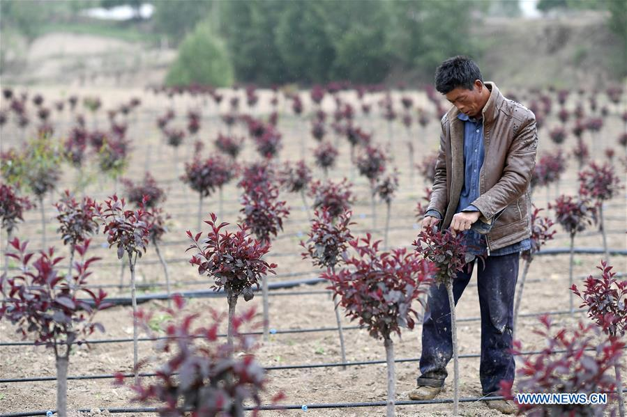 Developing forestry and grassland industry brings villagers out of poverty in Ningxia