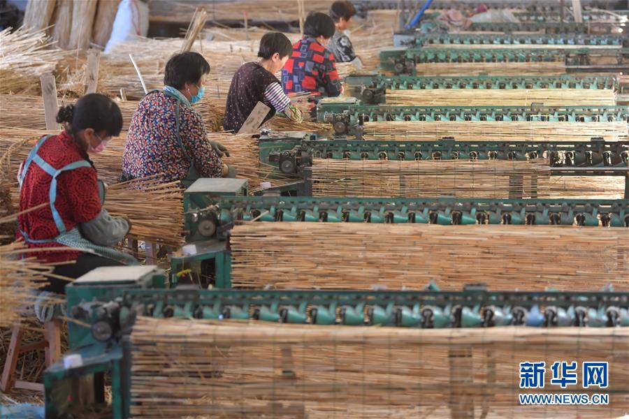 (经济)(1)河北滦南:苇帘出口助增收
