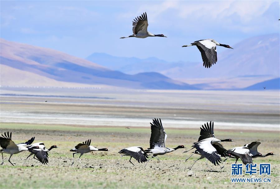 (环境)(10)西藏仍然是世界上生态环境最好的地区之一