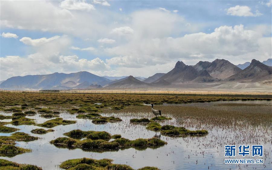 (环境)(14)西藏仍然是世界上生态环境最好的地区之一