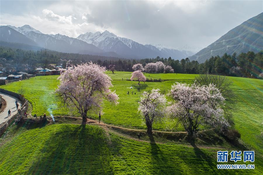 (环境)(5)西藏仍然是世界上生态环境最好的地区之一