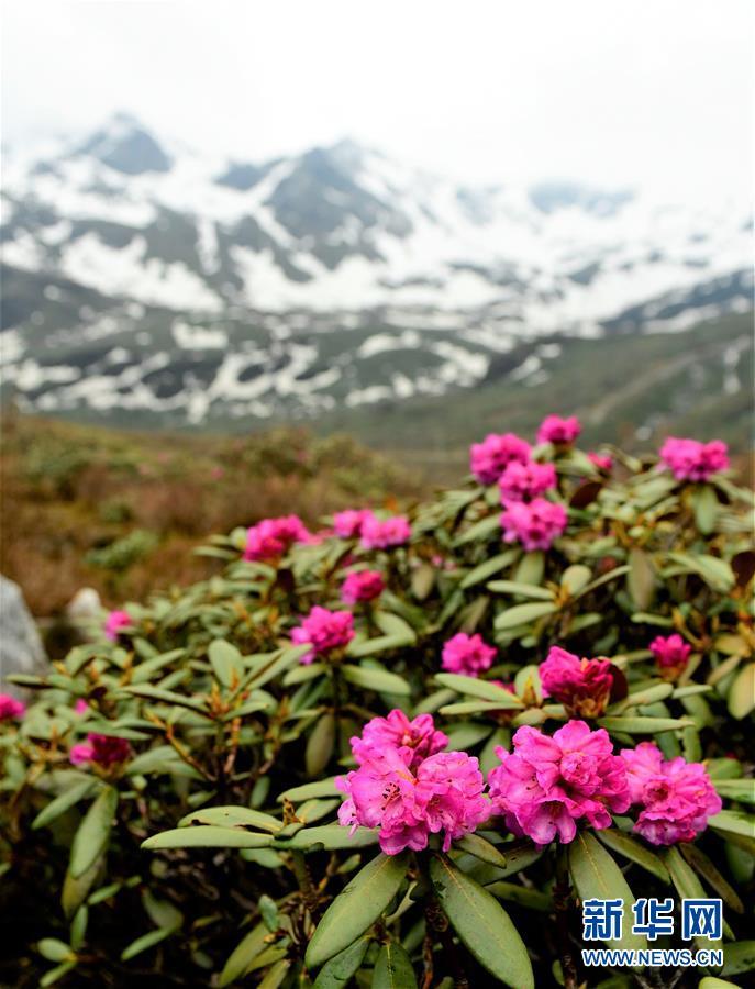 (环境)(11)西藏仍然是世界上生态环境最好的地区之一