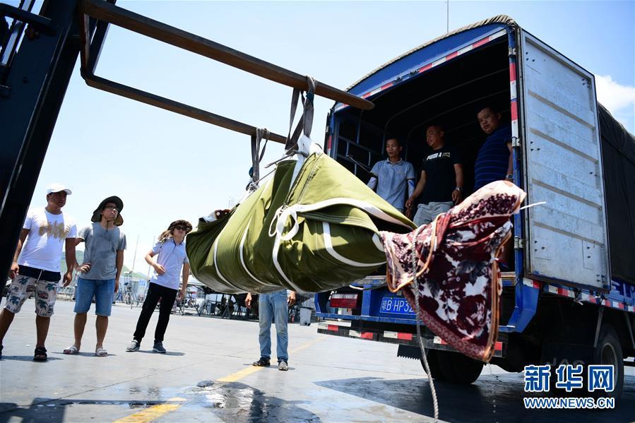 #(环境)(1)三亚受伤搁浅领航鲸死亡