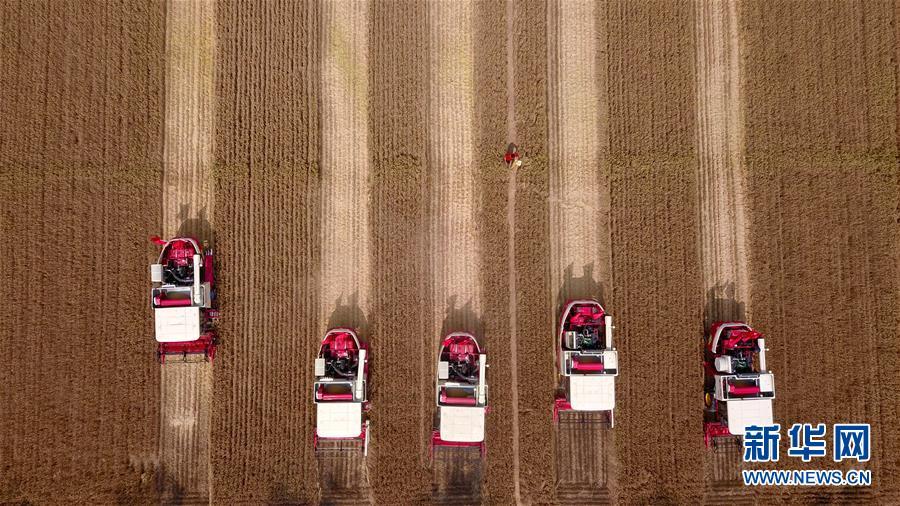 (聚焦中国经济亮点·图文互动)(2)夏粮收获近八成 丰收已成定局