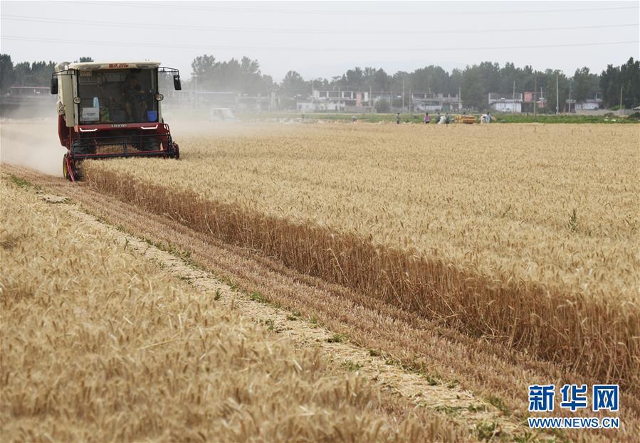 #(经济)(4)全国夏粮收获已近八成