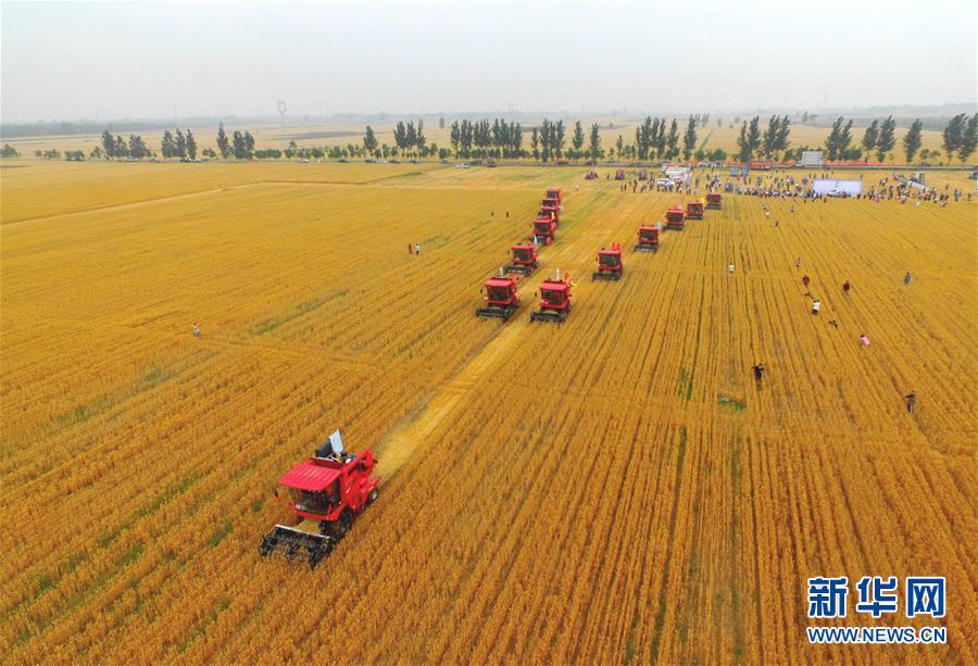 (聚焦中国经济亮点·图文互动)(3)夏粮收获近八成 丰收已成定局