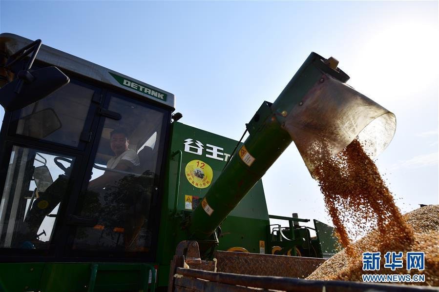 (聚焦中国经济亮点·图文互动)(4)夏粮收获近八成 丰收已成定局