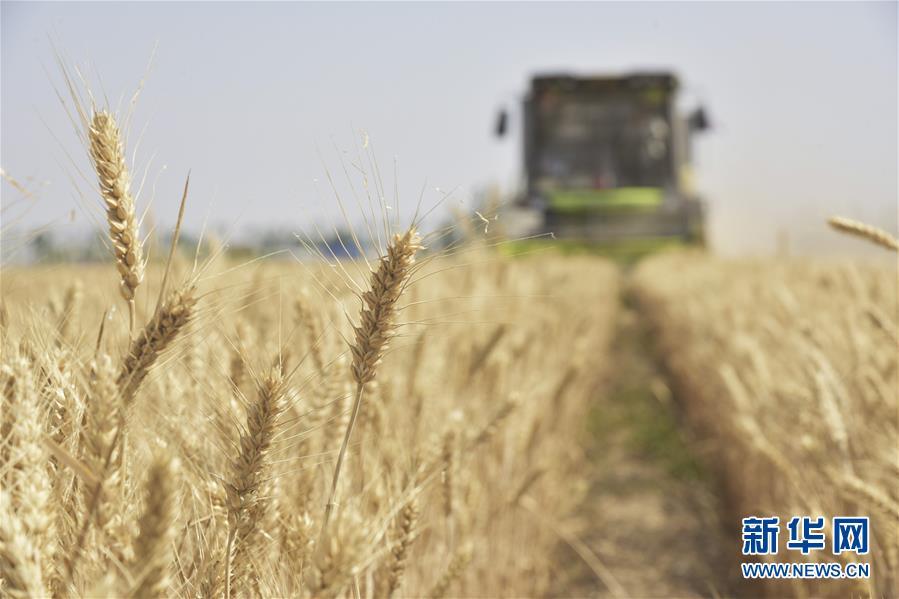 #(经济)(2)全国夏粮收获已近八成