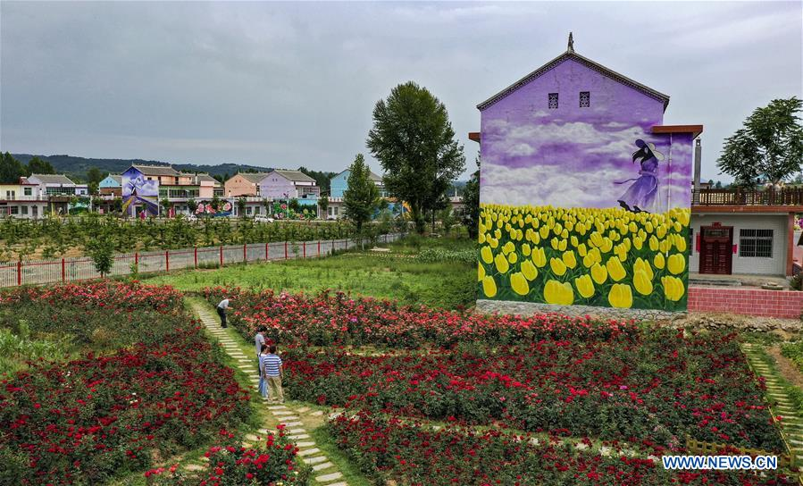 Rose town attracts many tourists in northwest China's Shaanxi